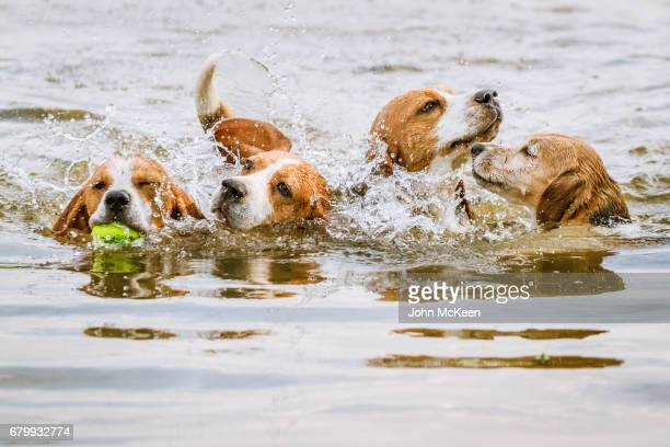 The Aqua Beagles