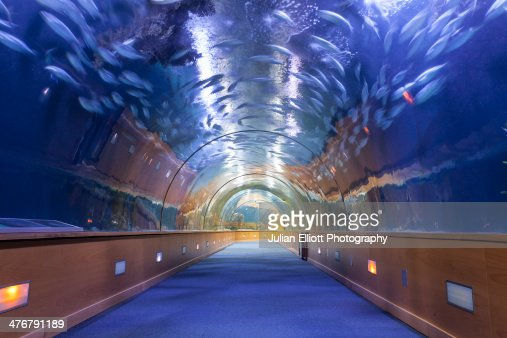 The aquarium in the city of arts and sciences foto de for Aquarium valencia precio