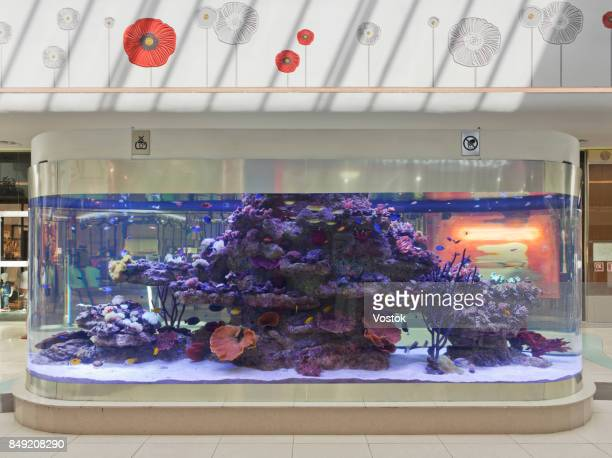The aquarium in the largest modern shopping Mall in Almaty