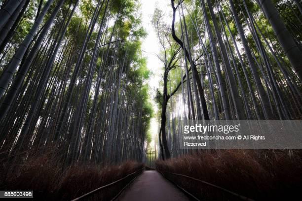 The Arashiyama Bamboo Grove in Kyoto