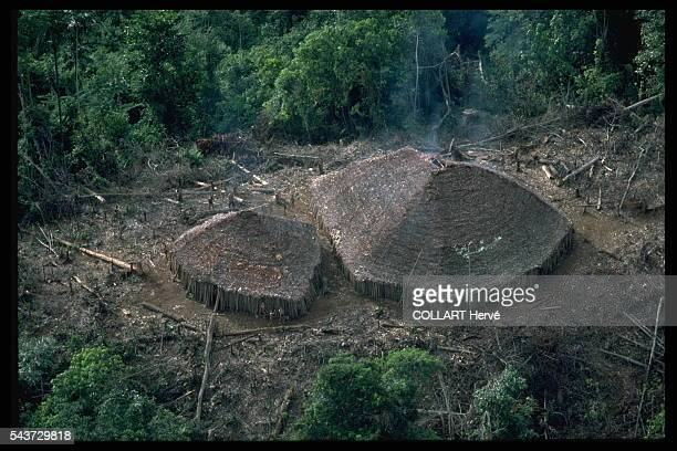 The area around Haut Parima is Yanomami heartland Each maloc shelters some hundred warriors and their families