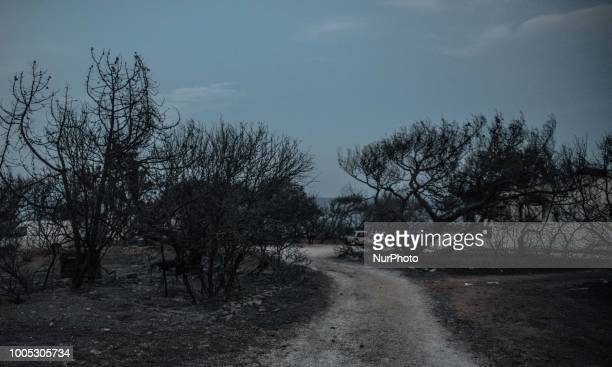 The area where 26 charred bodies were found following a deadly forest fire in Mati a northeast suburb of Athens Greece 25 July 2018