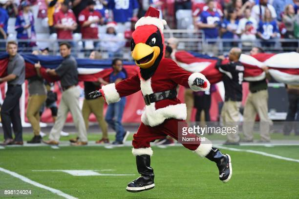 The Arizona Cardinals mascot Big Red runs on the field in a Santa Claus costume for the NFL game between the New York Giants and Arizona Cardinals at...