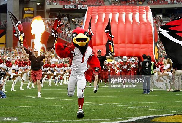 The Arizona Cardinals mascot Big Red runs out onto the field before the NFL game against the Green Bay Packers at the Universtity of Phoenix Stadium...