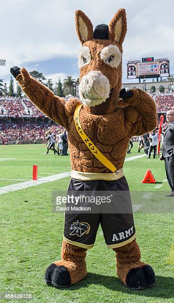The Army Black Knights mule mascot gestures on the sidelines during an NCAA football game against the Stanford University Cardinal played on...