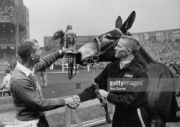 The Army Mule and the Air Force Falcon at a game