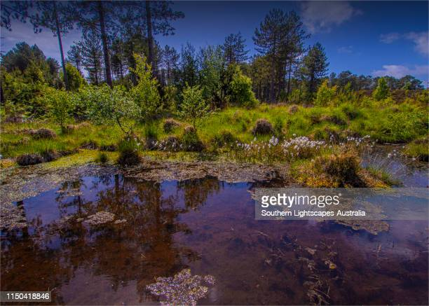 the arne forest, isle of purbeck, dorset, england. - nature reserve stock pictures, royalty-free photos & images