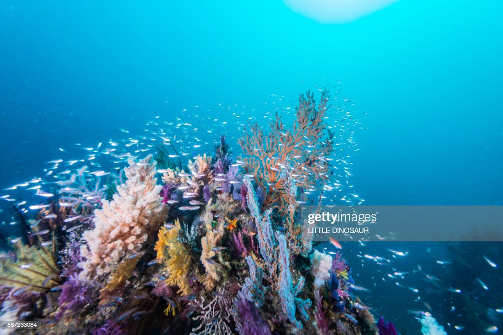the artificial fish reef covered with a school of fish : Stock-Foto