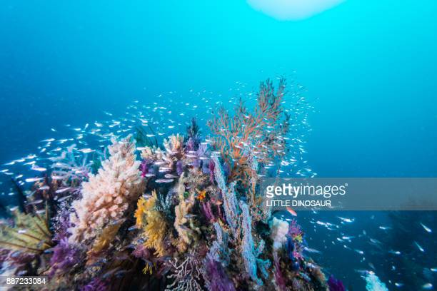 the artificial fish reef covered with a school of fish - underwater stock pictures, royalty-free photos & images