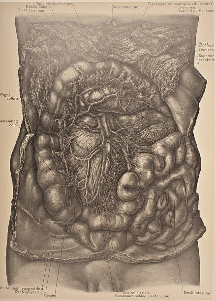Right Side Of Mesentary Cecum Ascending Colon Pictures Getty Images