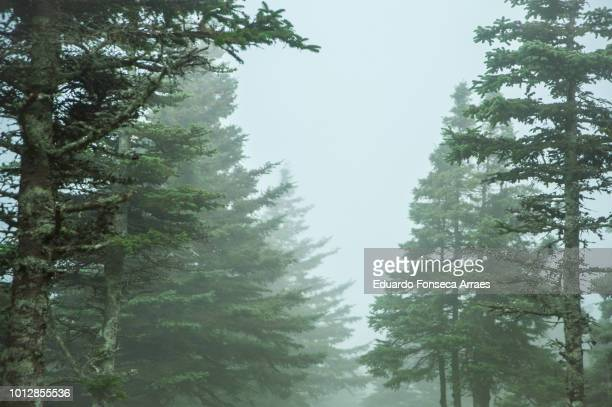 the atlantic coast of canada - fog and forest at cape breton highlands national park - cape breton island stock pictures, royalty-free photos & images
