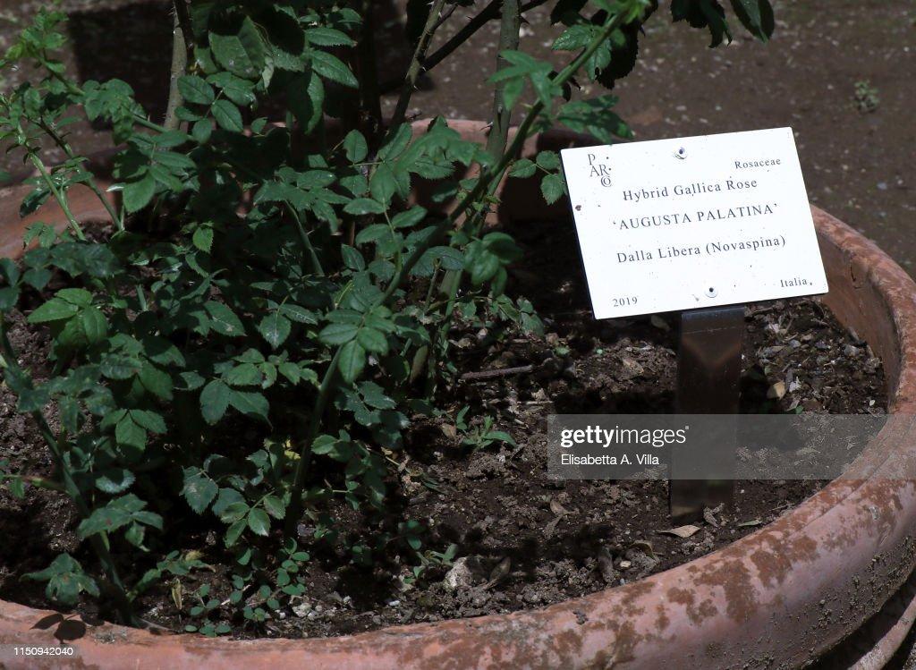 ITA: Augusta Palatina Rose Presentation in Rome