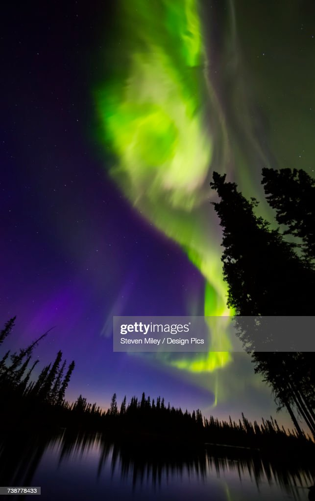 The aurora borealis explodes in the sky above the Clearwater River in Delta Junction shortly before sunrise : ストックフォト