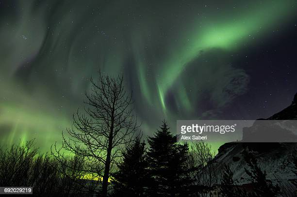 the aurora borealis in iceland with trees in the foreground. - alex saberi stock pictures, royalty-free photos & images