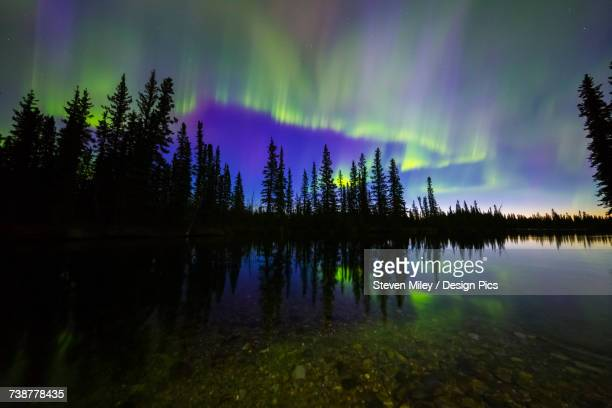 the aurora borealis reflects in the clearwater river in delta junction shortly before sunrise - delta force stock photos and pictures