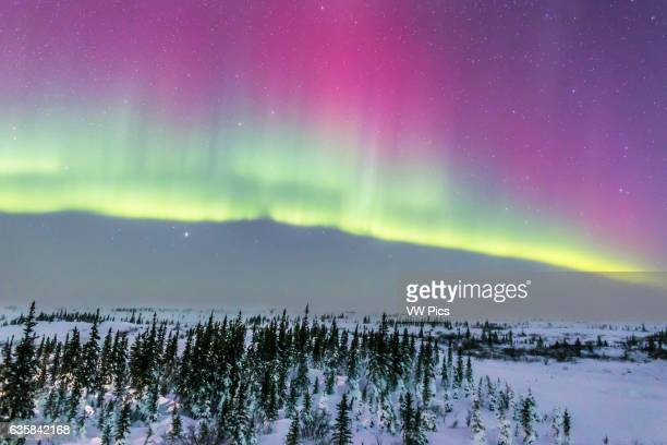 The aurora on the night of February 20 2015 from Churchill Manitoba from the Churchill Northern Studies Centre his is looking north toward a curtain...