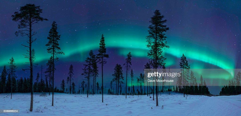 The Aurora & the Great Bear : Stock Photo
