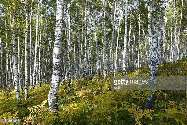 The autumn forest. Altay motives.