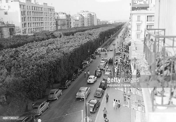 The Avenue Jules Ferry circa 1950 in Tunis Tunisia