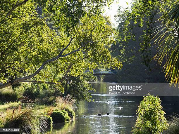 The Avon River in Christchurch Botanic Gardens