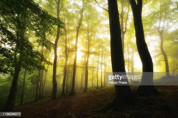 the awakening of the forest - アラバ県 ストックフォトと画像