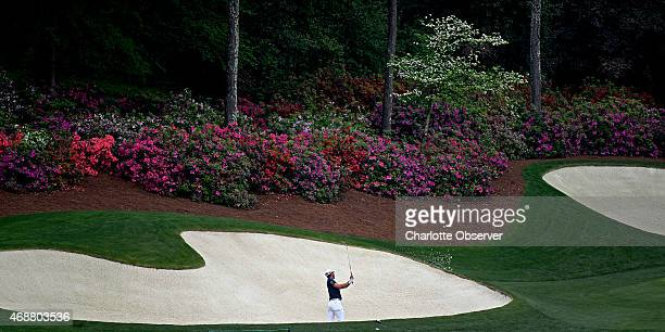 The azaleas and a dogwood begin to display their blooms as golfer Mike Weir hits from a bunker along the 13th green on Tuesday April 7 2015 at...