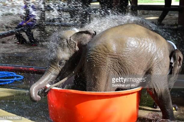 the baby elephant - um animal stockfoto's en -beelden