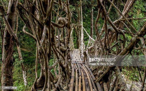 the baduy root bridge - tribal art stock pictures, royalty-free photos & images