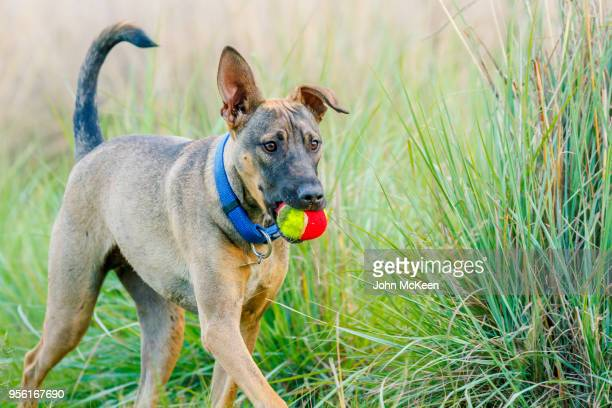the ball is mine - hairy balls stock photos and pictures