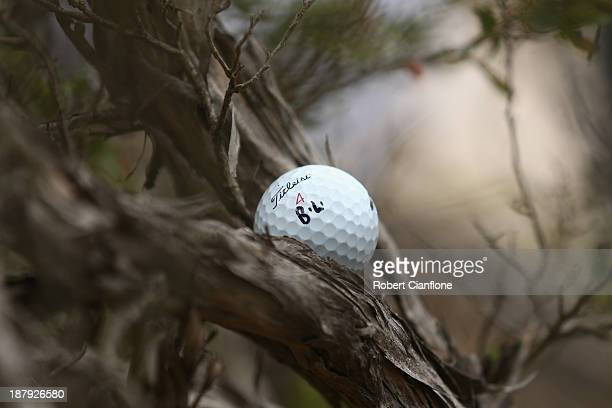 The ball of Jarrod Lyle is seen stuck in a tree on the 10th during round one of the 2013 Australian Masters at Royal Melbourne Golf Course on...