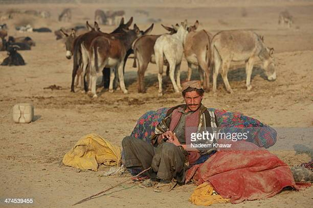 """The baloch man at morning making the small ball with his tobacco called """"Naswar"""" to putt in his mouth for take start his day. The Baloch shepherd..."""