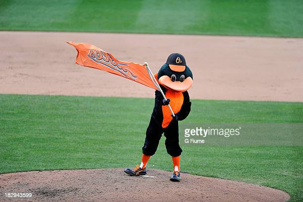 The Baltimore Orioles mascot celebrates after a victory against the Boston Red Sox at Oriole Park at Camden Yards on September 29 2013 in Baltimore...