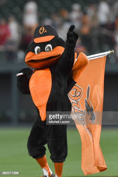 The Baltimore Orioles mascot on the field after during a baseball game against the Boston Red Sox at Oriole Park at Camden Yards on June 1 2017 in...
