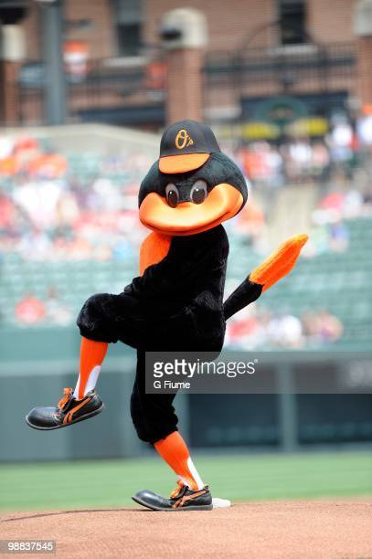 The Baltimore Orioles Mascot The Oriole Bird performs before the game against the Boston Red Sox at Camden Yards on May 2 2010 in Baltimore Maryland