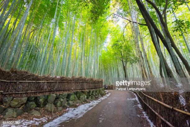 the Bamboo Grove, Kyoto, Japan
