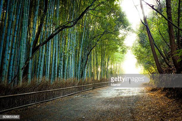 The bamboo path near Arashiyama