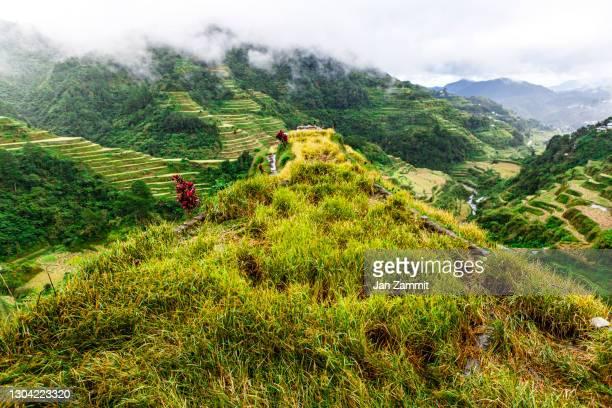 the banaue rice terraces - hauptstadtregion stock-fotos und bilder