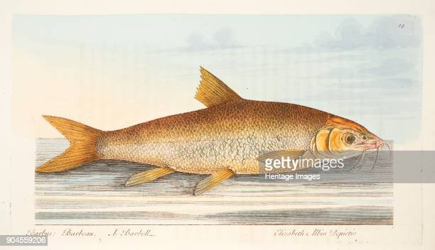 The Barbel from A Treatise on Fish and Fishponds pub 1832