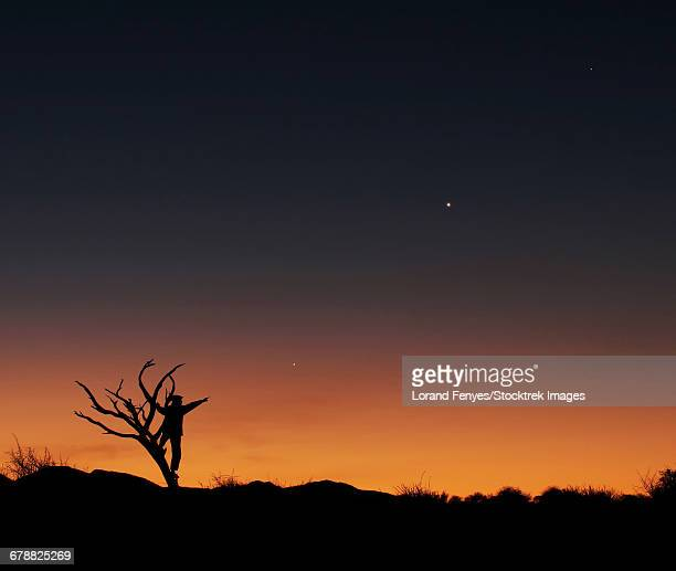 The bare tree and human figure point to the direction of Jupiter, Venus and Mercrury