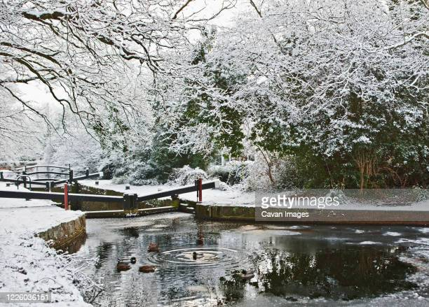 the basingstoke canal in south england during winter - rural scene stock pictures, royalty-free photos & images