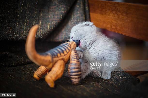 The battle between kitten and dinosaur toy