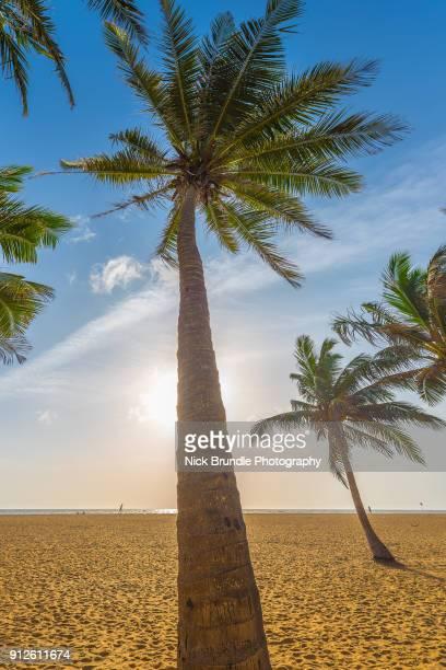 The beach at Negombo, Sri lanka