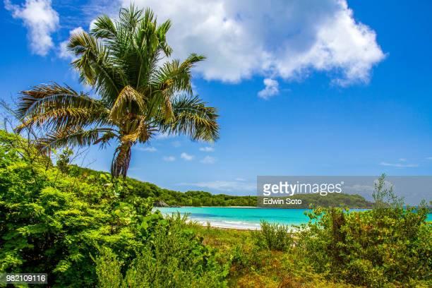 the beach - puerto rico fotografías e imágenes de stock