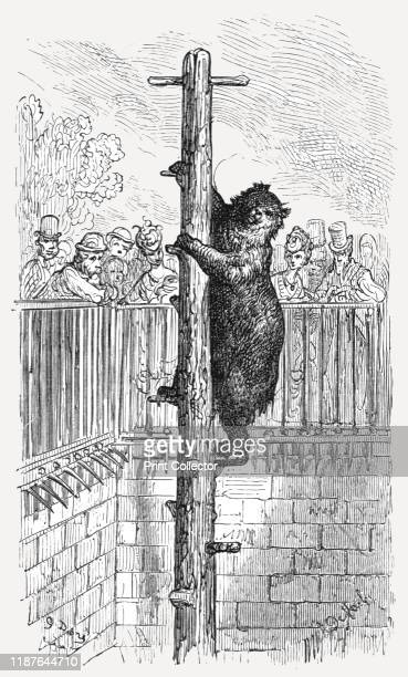 The Bear PitZoological Gardens' 1872 The Zoological Society of London was founded by Stamford Raffles in 1826 London Zoo opened two years' later From...