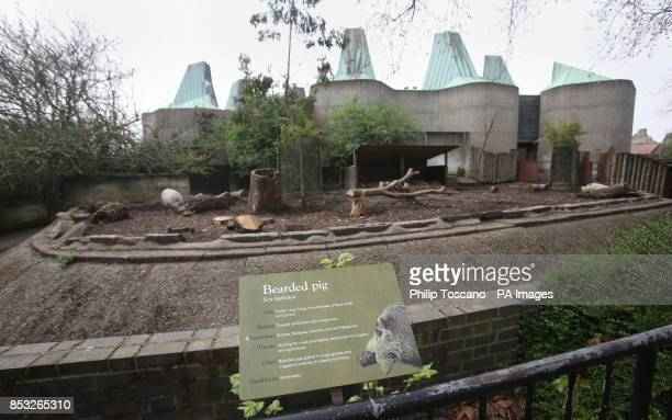 The bearded pig enclosure at London Zoo central London