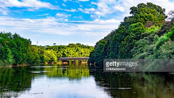 the beauties of the piracicaba river. - crmacedonio stock pictures, royalty-free photos & images