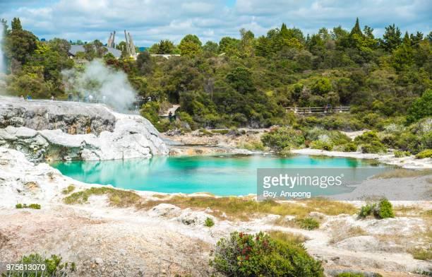 the beautiful geothermal hot pool nearly pohutu and prince of wales geysers in whakarewarewa thermal village, rotorua, new zealand. - rotorua stock pictures, royalty-free photos & images
