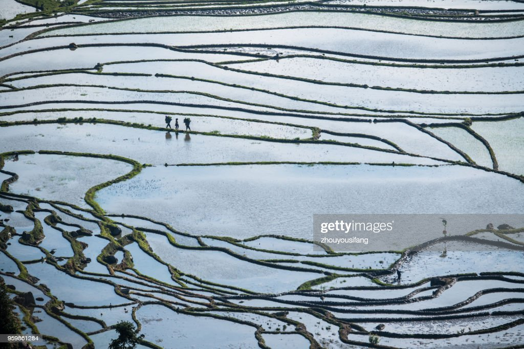 The beautiful line of the terraced fields : Stock-Foto