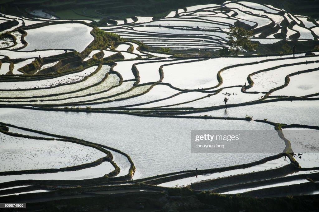 The beautiful lines of terraced fields : Stock-Foto