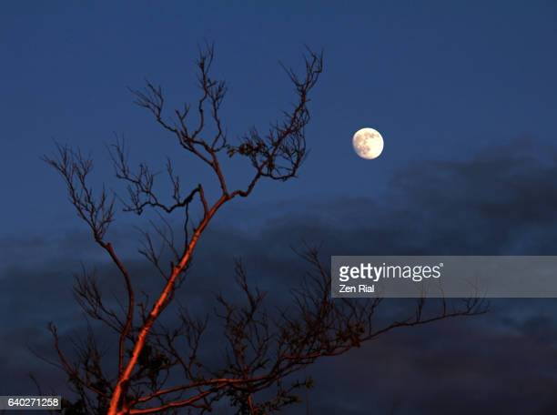 the beautiful moon in waxing gibbous phase over annapolis royal, nova scotia, canada - zen rial stock photos and pictures